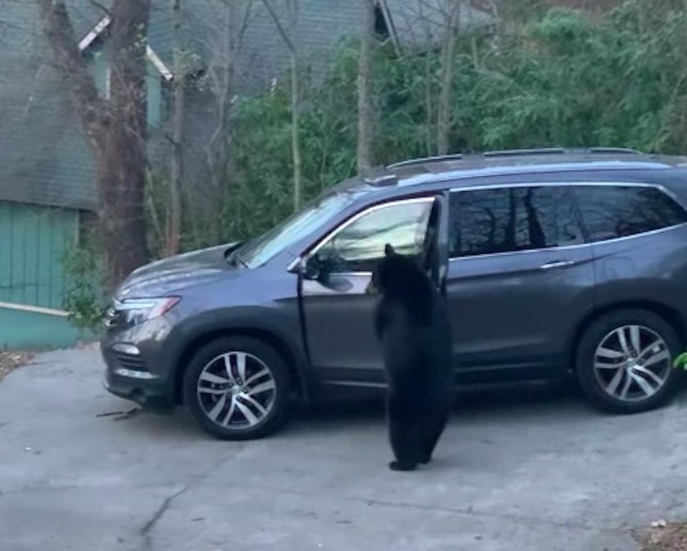 Medvjed došetao do automobila i počastio se slatkišima
